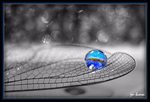dragonfly_wing
