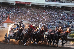 chuckwagon-races-calgary-stampede