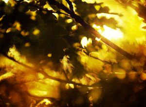 sunlight_in_the_trees