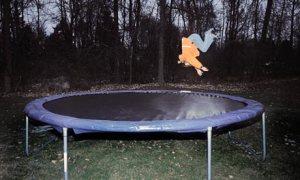 child-trampoline-007
