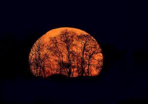 harvest-moon-rising-william-jobes
