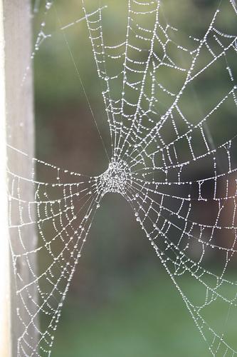 broken-web
