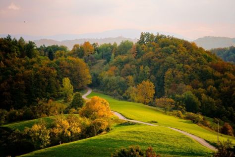 treesonhill